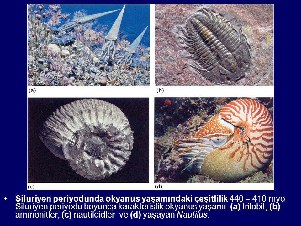 Siluriyen periyodunda okyanus yaşamındaki çeşitlilik 440 – 410 myö Siluriyen periyodu boyunca karakteristik okyanus yaşamı. (a) trilobit, (b) ammonitl