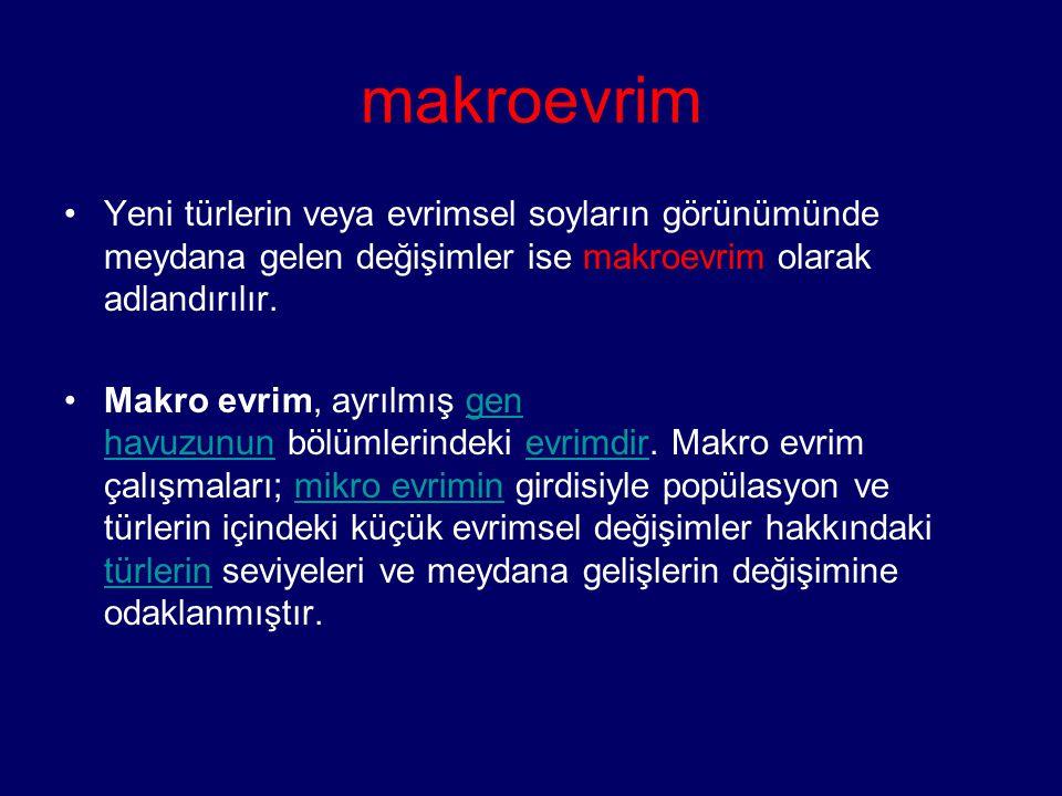 makroevrim Yeni türlerin veya evrimsel soyların görünümünde meydana gelen değişimler ise makroevrim olarak adlandırılır. Makro evrim, ayrılmış gen hav