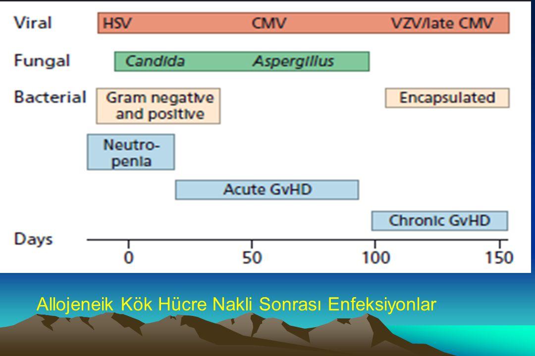 Allojeneik Kök Hücre Nakli Sonrası Enfeksiyonlar