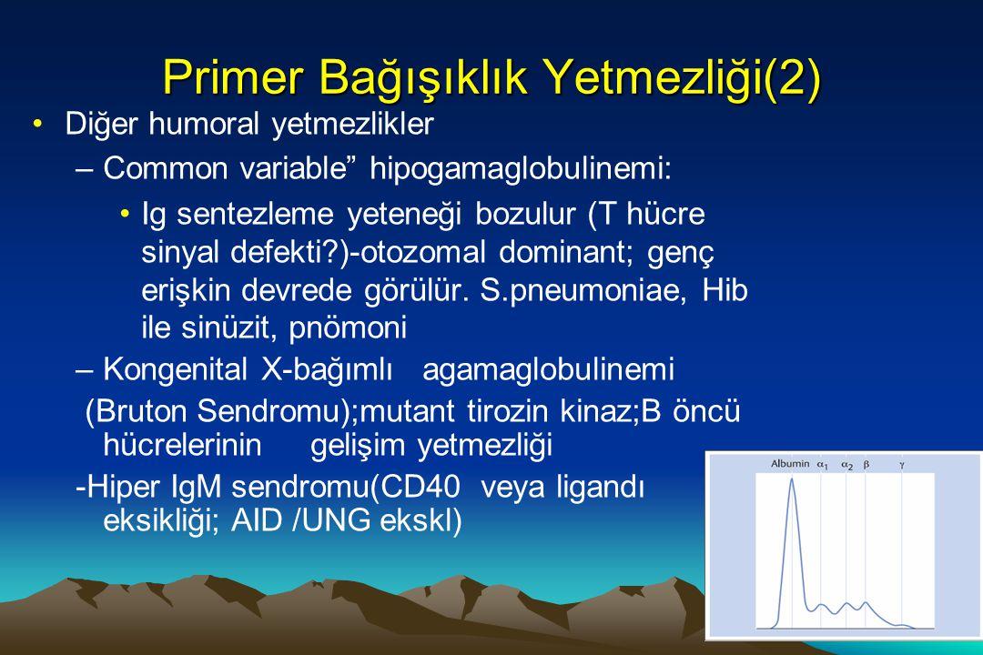 Primer bağışıklık eksikliği T Hücre Yetmezliği(3) T hücre eksikliği –En sık sebepler: DiGeorge sndr, ZAP-70 eksikliği, X-bağımlı lenfoproliferatif sndr,kronik mükokütanöz kandidyaz –Di George Sendromu (timik hipoplazi; paratroid gelişim yetmezliği:hipokalsemi; aort ark kusurları, kalp hastalıkları) –ZAP-70 eksikliği:Sinyal defekti sonucu T hücre aktivasyonu bozulur: Ciddi kombine immun yetmezlik benzeri tablolar görülür (CD8 hücreler yok) –Kronik mükokütanöz kandidyaz:T hücre res'inin Candida antijenlerini tanıma defekti + (endokrin anormallikler: primer hipoparatroidizm, Addison hast, pernisiöz anemi, tip 1 diabetes mellitus)