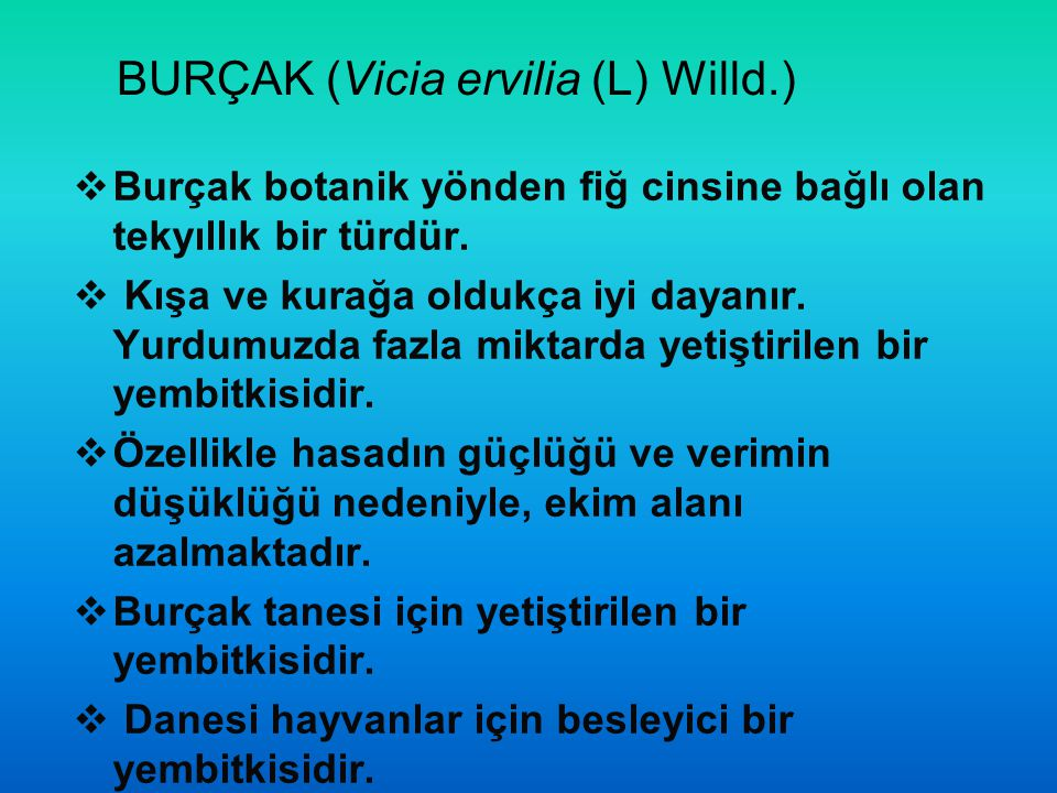 BURÇAK (Vicia ervilia (L) Willd.)  Burçak botanik yönden fiğ cinsine bağlı olan tekyıllık bir türdür.