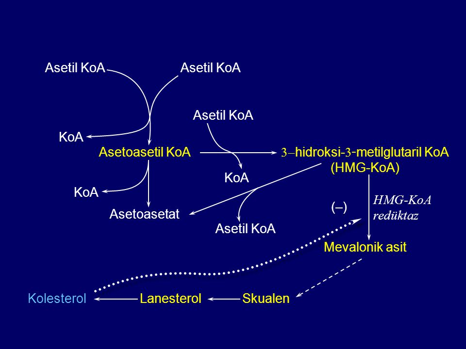 Asetil KoA Asetoasetil KoA  hidroksi-  - metilglutaril KoA (HMG-KoA) Mevalonik asit SkualenLanesterolKolesterol Asetoasetat Asetil KoA KoA Asetil KoA KoA (–) HMG-KoA redüktaz