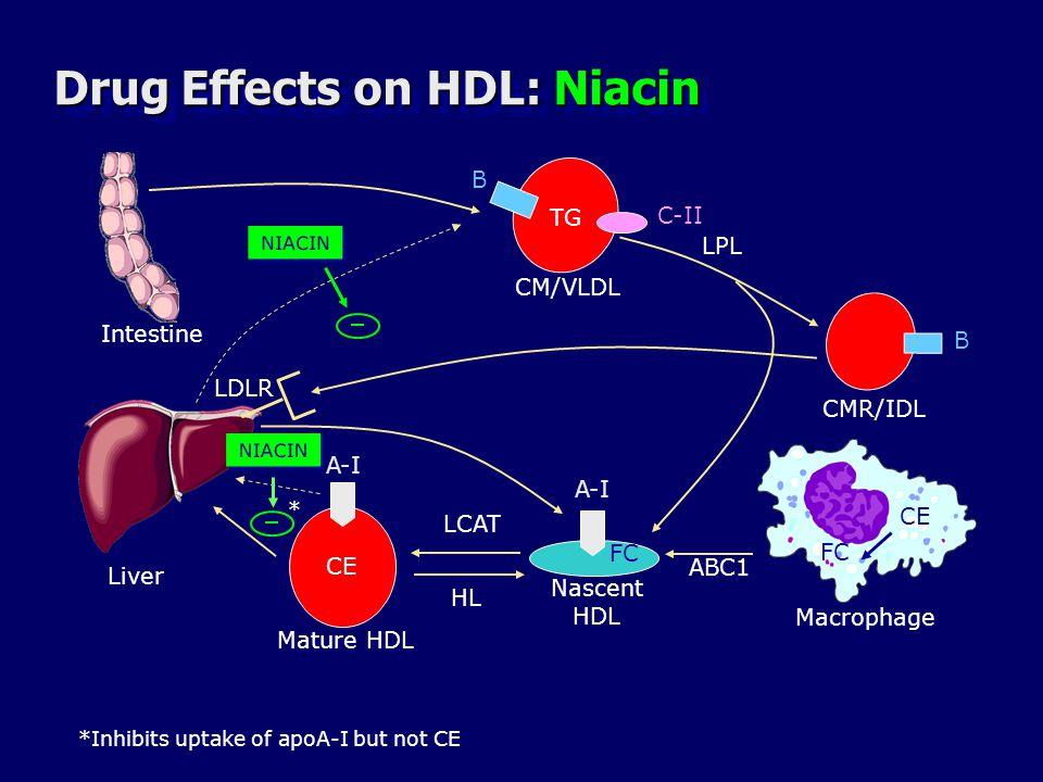 Drug Effects on HDL: Niacin Liver B B TG CMR/IDL C-II CM/VLDL LPL A-I CE FC LCAT A-I ABC1 Macrophage Mature HDL Nascent HDL LDLR HL Intestine NIACIN * *Inhibits uptake of apoA-I but not CE