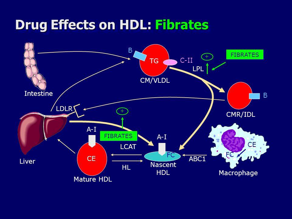 Drug Effects on HDL: Fibrates Liver B B TG CMR/IDL C-II CM/VLDL LPL A-I CE FC LCAT A-I ABC1 Macrophage Mature HDL Nascent HDL LDLR HL FIBRATES + + Intestine