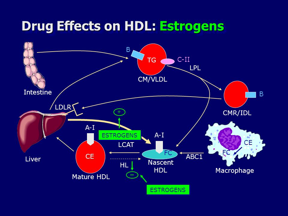 Drug Effects on HDL: Estrogens Liver B B TG CMR/IDL C-II CM/VLDL LPL A-I CE FC LCAT A-I ABC1 Macrophage Mature HDL Nascent HDL LDLR HL ESTROGENS + Intestine