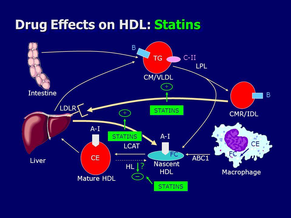 Drug Effects on HDL: Statins Liver B B TG CMR/IDL C-II CM/VLDL LPL A-I CE FC LCAT A-I ABC1 Macrophage Mature HDL Nascent HDL LDLR HL + STATINS Intesti