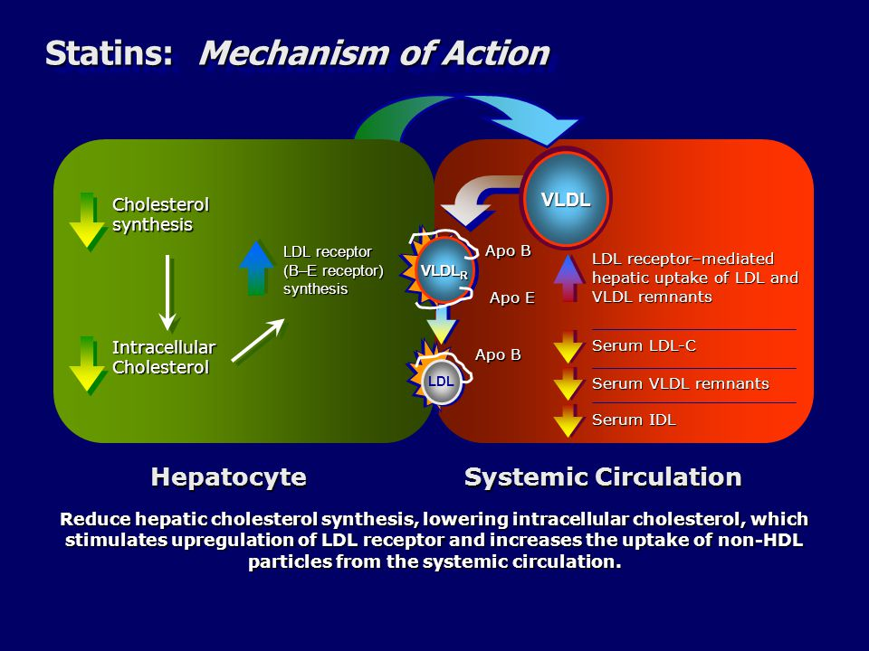 Statins: Mechanism of Action LDL receptor–mediated hepatic uptake of LDL and VLDL remnants Serum VLDL remnants Serum LDL-C Cholesterol synthesis LDL receptor (B–E receptor) synthesis Intracellular Cholesterol Apo B Apo E Apo B Systemic Circulation Hepatocyte Reduce hepatic cholesterol synthesis, lowering intracellular cholesterol, which stimulates upregulation of LDL receptor and increases the uptake of non-HDL particles from the systemic circulation.