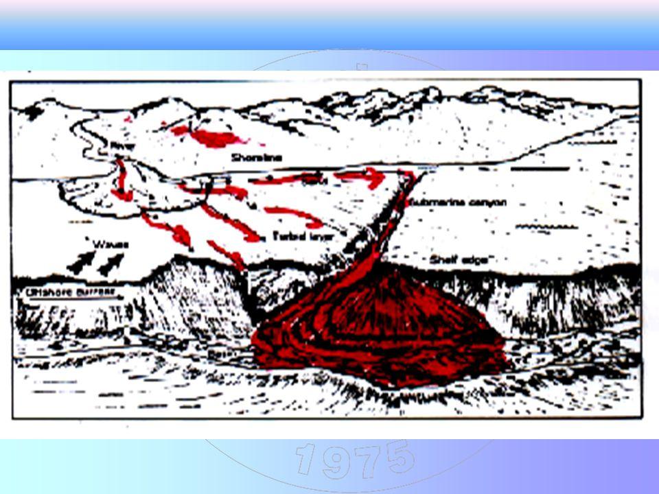 -Bu türbidit fasiyesi deniz altı yelpazelerinin üst kısımlarında yani sediment - kaynak alanına yakın olarak çökelirler.