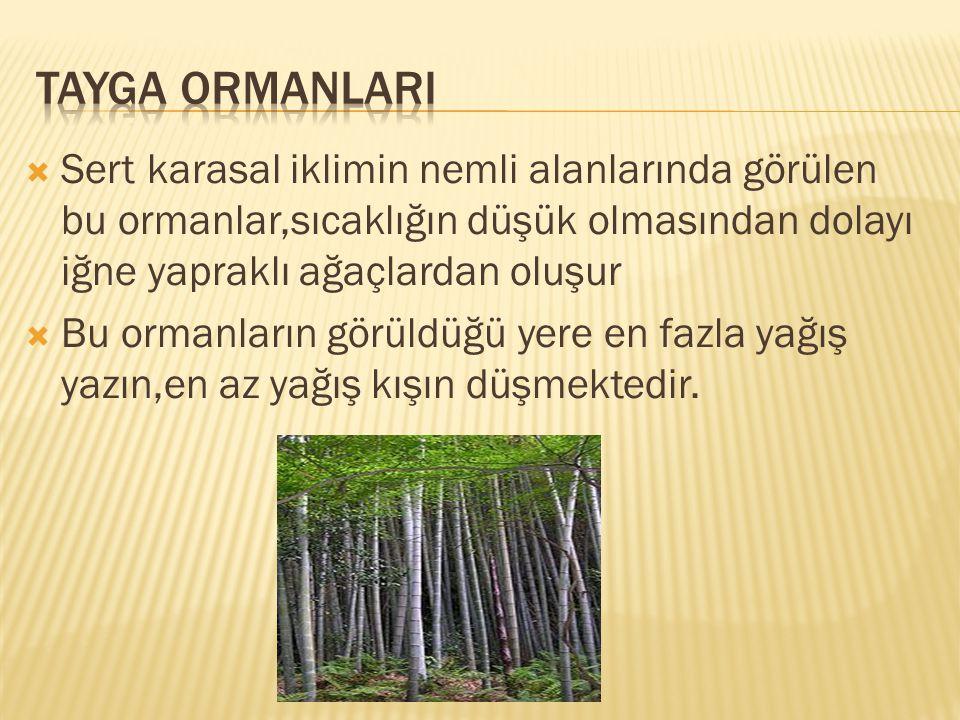  Sert karasal iklimin nemli alanlarında görülen bu ormanlar,sıcaklığın düşük olmasından dolayı iğne yapraklı ağaçlardan oluşur  Bu ormanların görüldüğü yere en fazla yağış yazın,en az yağış kışın düşmektedir.