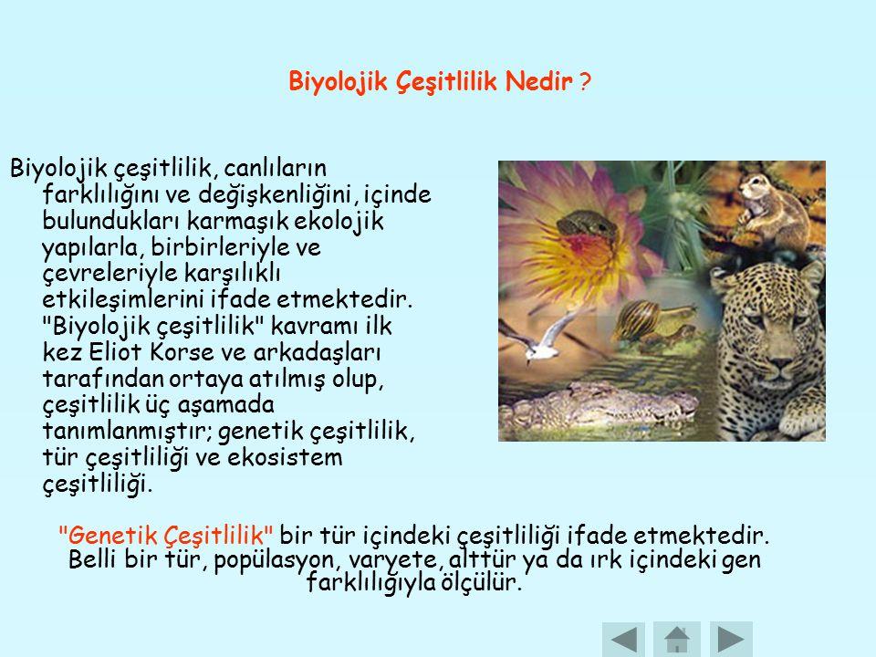 Biyolojik Çeşitlilik Nedir ? Biyolojik çeşitlilik, canlıların farklılığını ve değişkenliğini, içinde bulundukları karmaşık ekolojik yapılarla, birbirl