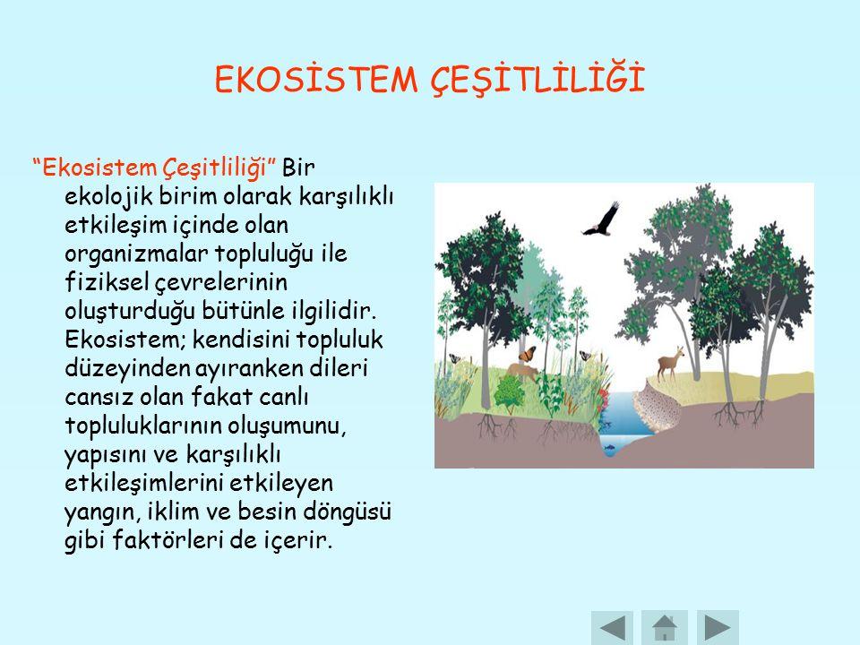 EKOSİSTEM ÇEŞİTLİLİĞİ Ekosistem Çeşitliliği Bir ekolojik birim olarak karşılıklı etkileşim içinde olan organizmalar topluluğu ile fiziksel çevrelerinin oluşturduğu bütünle ilgilidir.