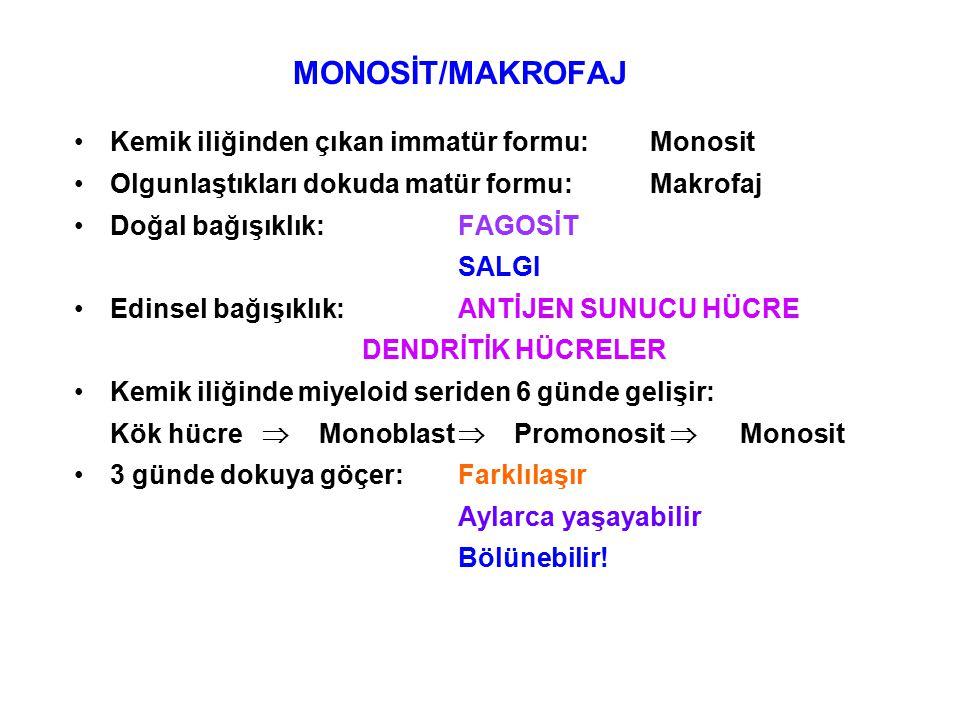 MONOSİT/MAKROFAJ Kemik iliğinden çıkan immatür formu:Monosit Olgunlaştıkları dokuda matür formu:Makrofaj Doğal bağışıklık:FAGOSİT SALGI Edinsel bağışıklık:ANTİJEN SUNUCU HÜCRE DENDRİTİK HÜCRELER Kemik iliğinde miyeloid seriden 6 günde gelişir: Kök hücre  Monoblast  Promonosit  Monosit 3 günde dokuya göçer:Farklılaşır Aylarca yaşayabilir Bölünebilir!