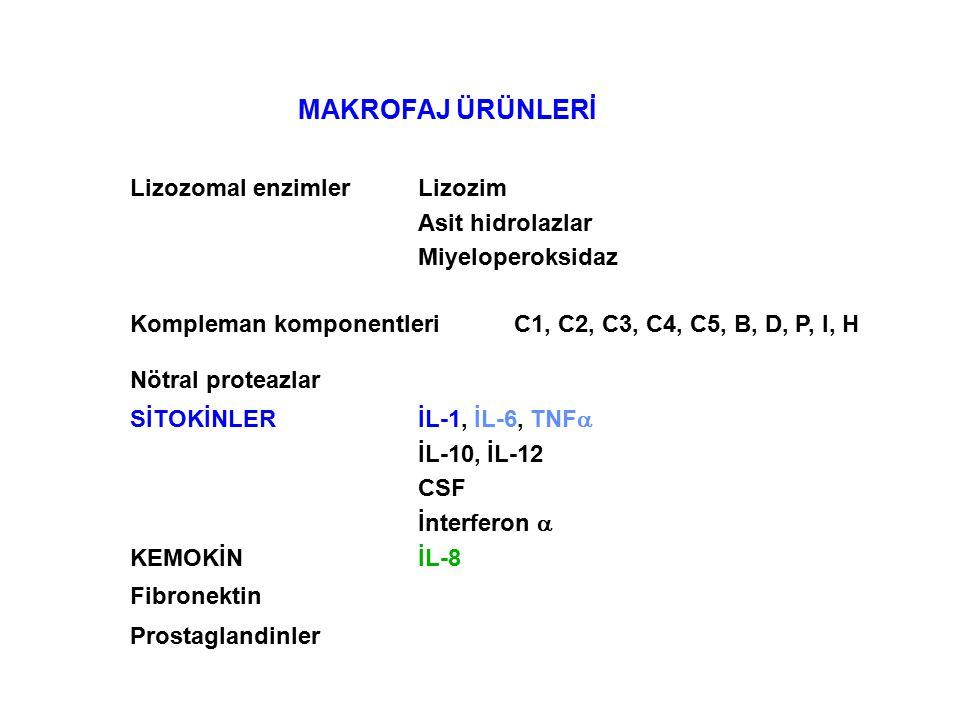 MAKROFAJ ÜRÜNLERİ Lizozomal enzimlerLizozim Asit hidrolazlar Miyeloperoksidaz Kompleman komponentleriC1, C2, C3, C4, C5, B, D, P, I, H Nötral proteazlar SİTOKİNLERİL-1, İL-6, TNF  İL-10, İL-12 CSF İnterferon  KEMOKİNİL-8 Fibronektin Prostaglandinler