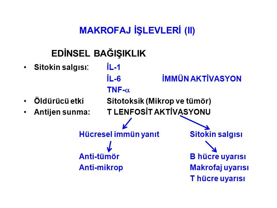 MAKROFAJ İŞLEVLERİ (II) EDİNSEL BAĞIŞIKLIK Sitokin salgısı : İL-1 İL-6İMMÜN AKTİVASYON TNF-  Öldürücü etkiSitotoksik (Mikrop ve tümör) Antijen sunma:T LENFOSİT AKTİVASYONU Hücresel immün yanıtSitokin salgısı Anti-tümörB hücre uyarısı Anti-mikropMakrofaj uyarısı T hücre uyarısı
