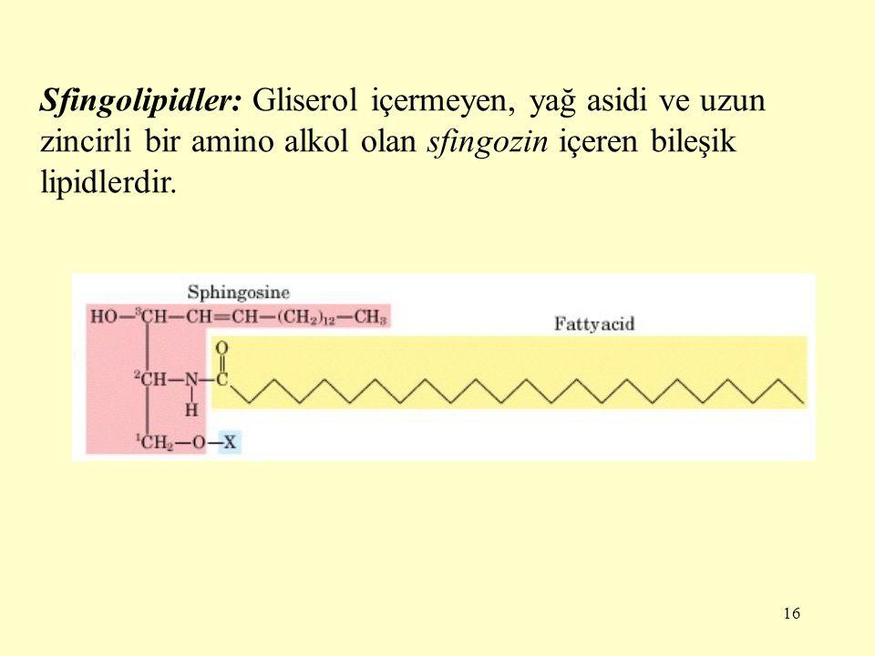 16 Sfingolipidler: Gliserol içermeyen, yağ asidi ve uzun zincirli bir amino alkol olan sfingozin içeren bileşik lipidlerdir.