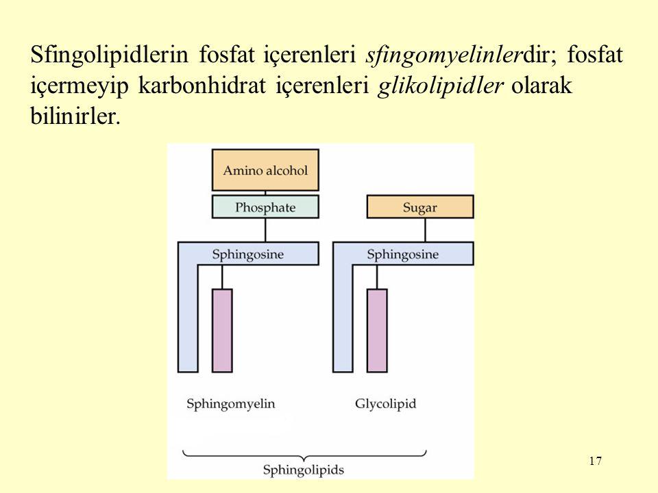 17 Sfingolipidlerin fosfat içerenleri sfingomyelinlerdir; fosfat içermeyip karbonhidrat içerenleri glikolipidler olarak bilinirler.