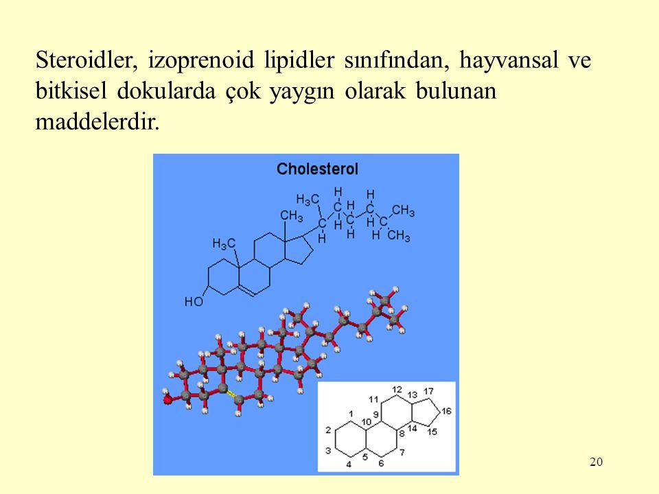 20 Steroidler, izoprenoid lipidler sınıfından, hayvansal ve bitkisel dokularda çok yaygın olarak bulunan maddelerdir.