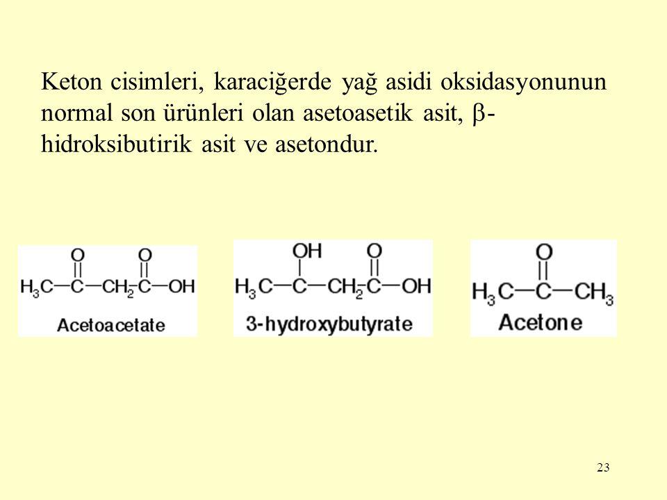 23 Keton cisimleri, karaciğerde yağ asidi oksidasyonunun normal son ürünleri olan asetoasetik asit,  - hidroksibutirik asit ve asetondur.
