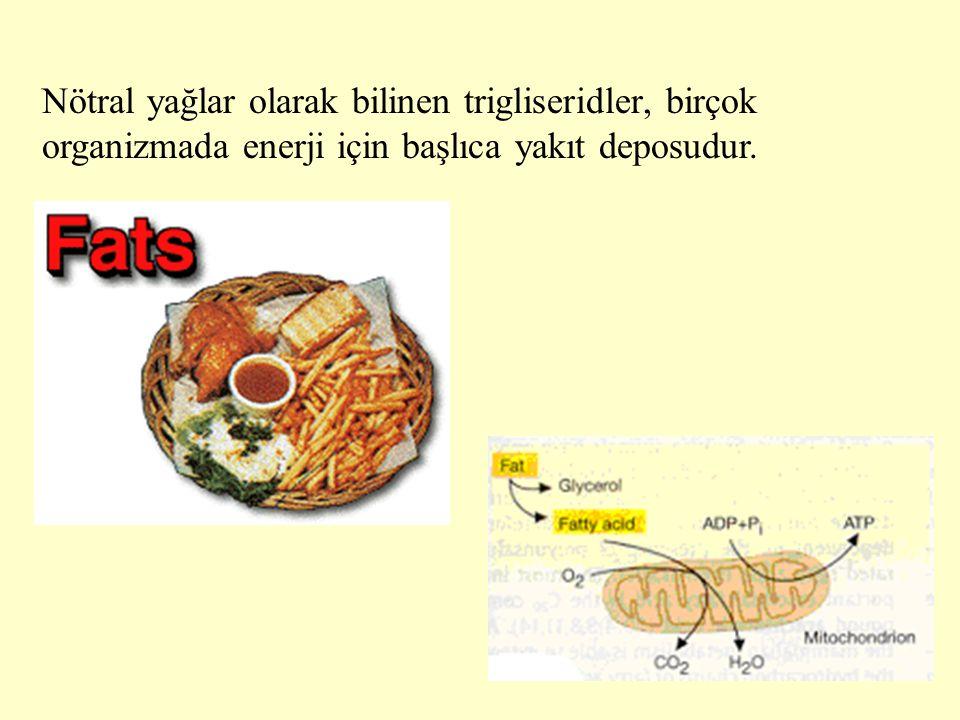 5 Nötral yağlar olarak bilinen trigliseridler, birçok organizmada enerji için başlıca yakıt deposudur.