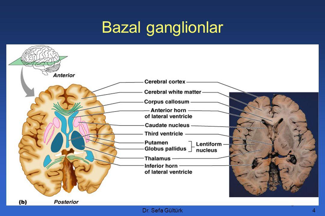 Dr.Sefa Gültürk5 Bazal ganglionlar Ak maddenin içine gömülü 5 nükleus vardır: –N.