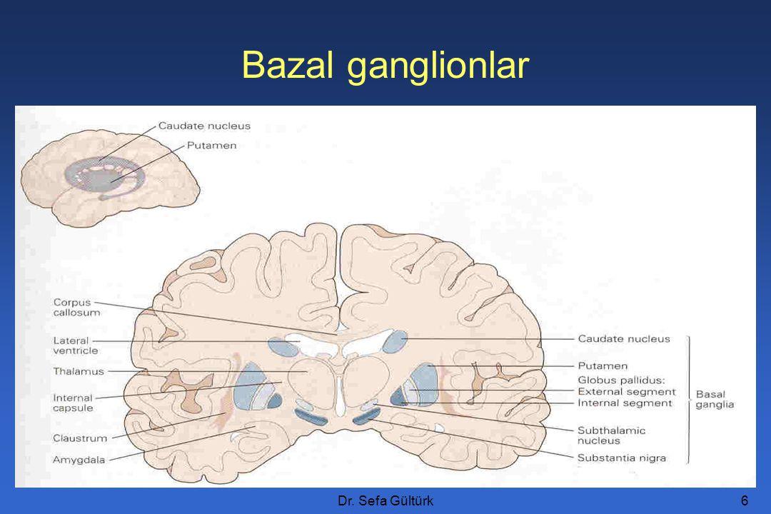 Dr. Sefa Gültürk7 Figure 12.11a Bazal ganglionlar