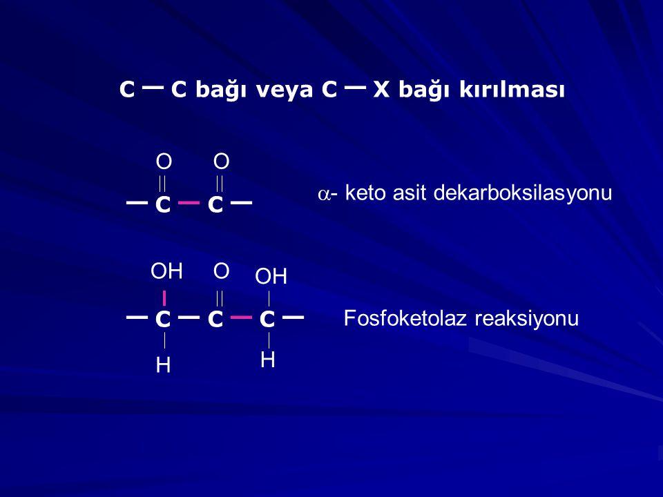 C _ C bağı veya C _ X bağı kırılması _ C _ C _ _ C _ C _ C _ O O OH O H H  - keto asit dekarboksilasyonu Fosfoketolaz reaksiyonu