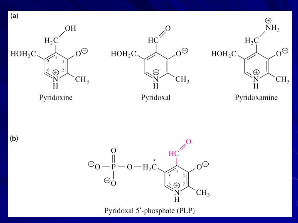  Transaminasyon   dekarboksilasyon  Rasemizasyon  ,  eliminasyon  ,  eliminasyon  Aldolizasyon  Aspartat ın  dekarboksilasyonu