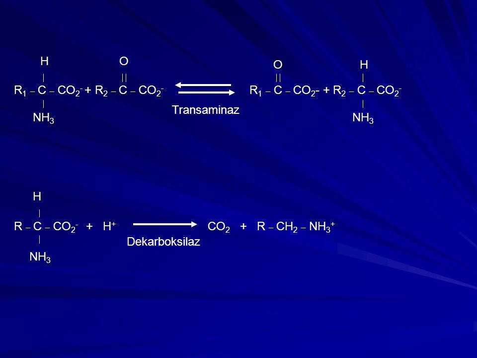 R 1 _ C _ CO 2 - + R 2 _ C _ CO 2 - H NH 3 O OH Transaminaz R _ C _ CO 2 - + H + CO 2 + R _ CH 2 _ NH 3 + H NH 3 Dekarboksilaz