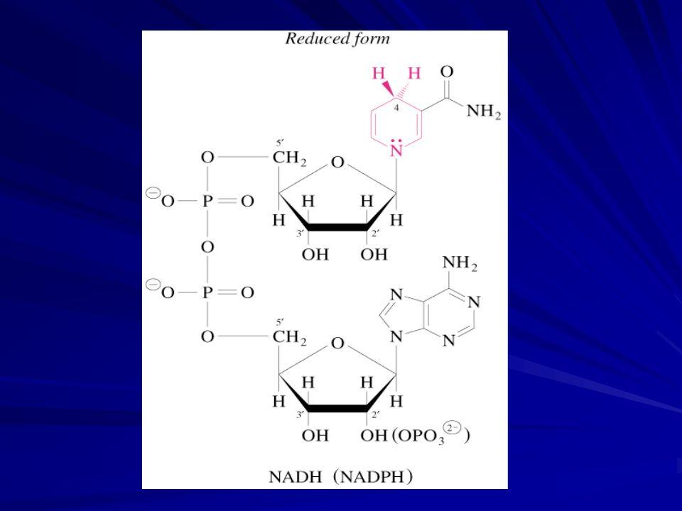 NAD ve NADP dehidrogenazlar için kosubstrattır Pridin nükleotidler tarafından oksidasyonda bir defada iki elektron transferi olur Dehidrogenazlar bir substrattan bir hidrid iyonunu (H: - ) NAD veya NADP nin pridin halkasına (C-4) transfer ederler NAD(P) + + 2e - + 2H + NAD(P)H + H +