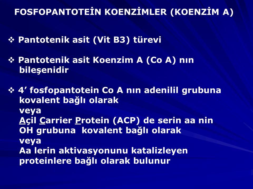 FOSFOPANTOTEİN KOENZİMLER (KOENZİM A)  Pantotenik asit (Vit B3) türevi  Pantotenik asit Koenzim A (Co A) nın bileşenidir  4' fosfopantotein Co A nın adenilil grubuna kovalent bağlı olarak veya Açil Carrier Protein (ACP) de serin aa nin OH grubuna kovalent bağlı olarak veya Aa lerin aktivasyonunu katalizleyen proteinlere bağlı olarak bulunur