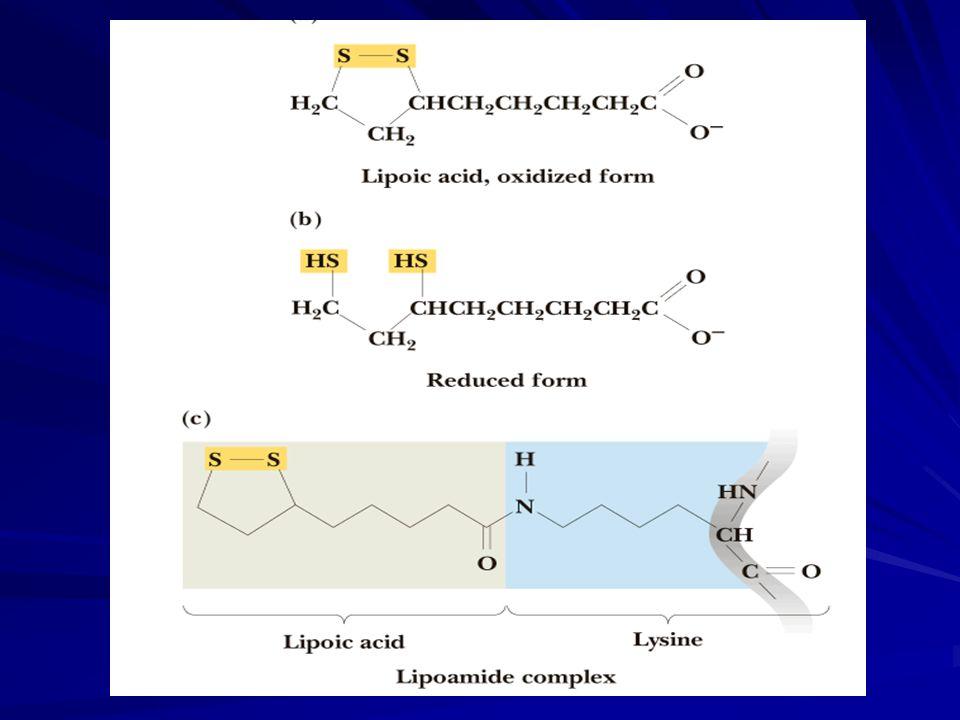  Lipoik asit enzimde lizin aa nin -amino grubuna amid bağıyla bağlı olarak bulunur  Piruvat DH rxn.da asetil grupları Asetil CoA oluşturmak üzere Koenzim A ya aktarılır  Lipoamid in C8 ne bağlı asetil grupları alıcı moleküle aktarılabilir  Hayvanlar lipoik asit sentez edebilirler  Lipoamid, multienzim kompleksinin aktif bölgeleri arasında açil gruplarını taşıyan yüzen bir kol gibi fonksiyon yapar