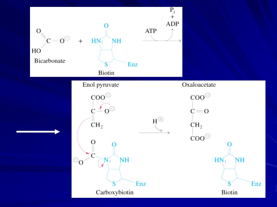 Most use bicarbonate and ATP Whenever you see a carboxylation that requires ATP and CO 2 or HCO 3 -, think biotin.