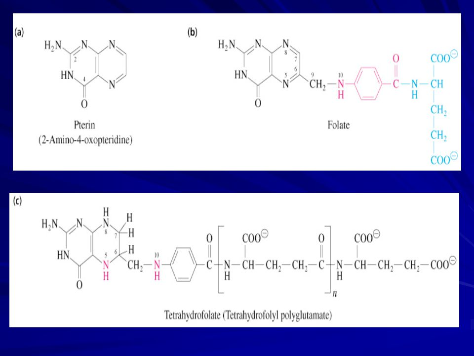 Koenzim formları:  N 5, N 10 metilen tetrahidrofolat OH metil vericisi (timidilat sentaz)  N 5, N 10 metenil tetrahidrofolat  N 10 formil tetrahidrofolat Formil vericisi (formilazlar)  N 5 metil tetrahidrofolat Metil vericisi (metionin sentaz)  THF, folattan dihidrofolat redüktaz enzimi aracılığıyla iki indirgenme basamağında sentezlenir