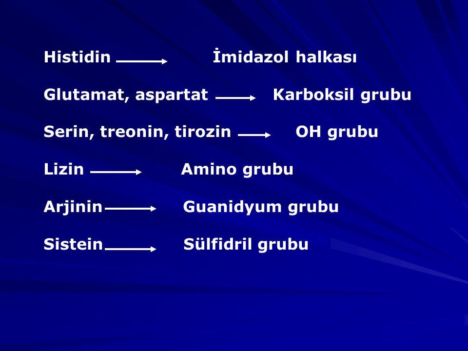 Histidin İmidazol halkası Glutamat, aspartat Karboksil grubu Serin, treonin, tirozin OH grubu Lizin Amino grubu Arjinin Guanidyum grubu Sistein Sülfidril grubu