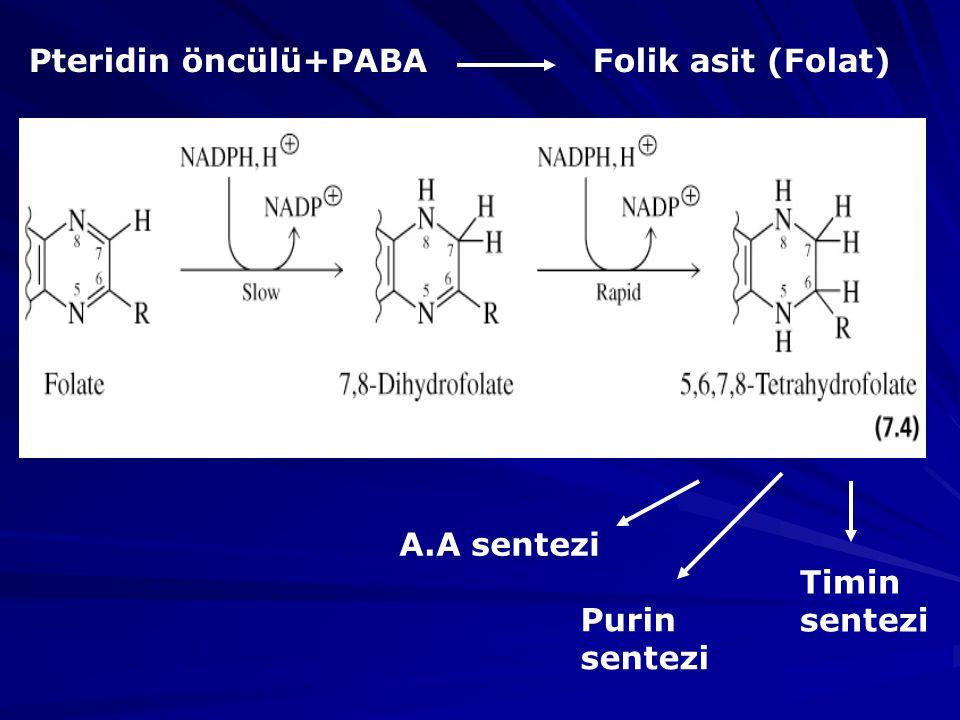 Pteridin öncülü+PABA Folik asit (Folat) A.A sentezi Timin sentezi Purin sentezi