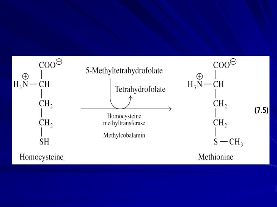  Vit B12 Normal folat fonksiyonu DNA sentezi Kırmızı kan hücrelerinin oluşumu Sinir hücrelerinin miyelin kılıfı için gereklidir  Besinsel kaynak Et, süt, kc, yum  Eksikliği Çoğunlukla emilimindeki bozukluktan kaynaklanır (intrinsik faktör) Pernisiöz anemi Megaloblastik anemi Sinir hasarı