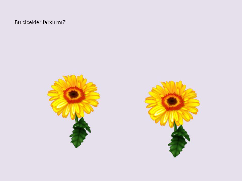 Bu çiçekler farklı mı?