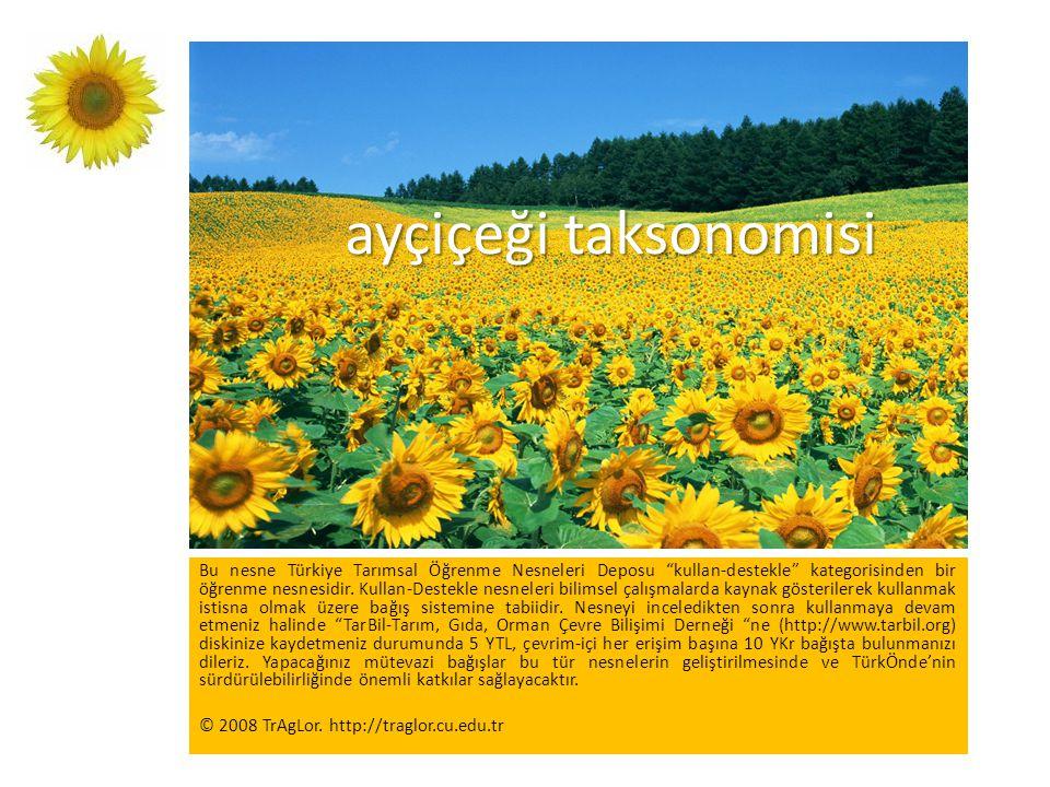 """ayçiçeği taksonomisi Bu nesne Türkiye Tarımsal Öğrenme Nesneleri Deposu """"kullan-destekle"""" kategorisinden bir öğrenme nesnesidir. Kullan-Destekle nesne"""