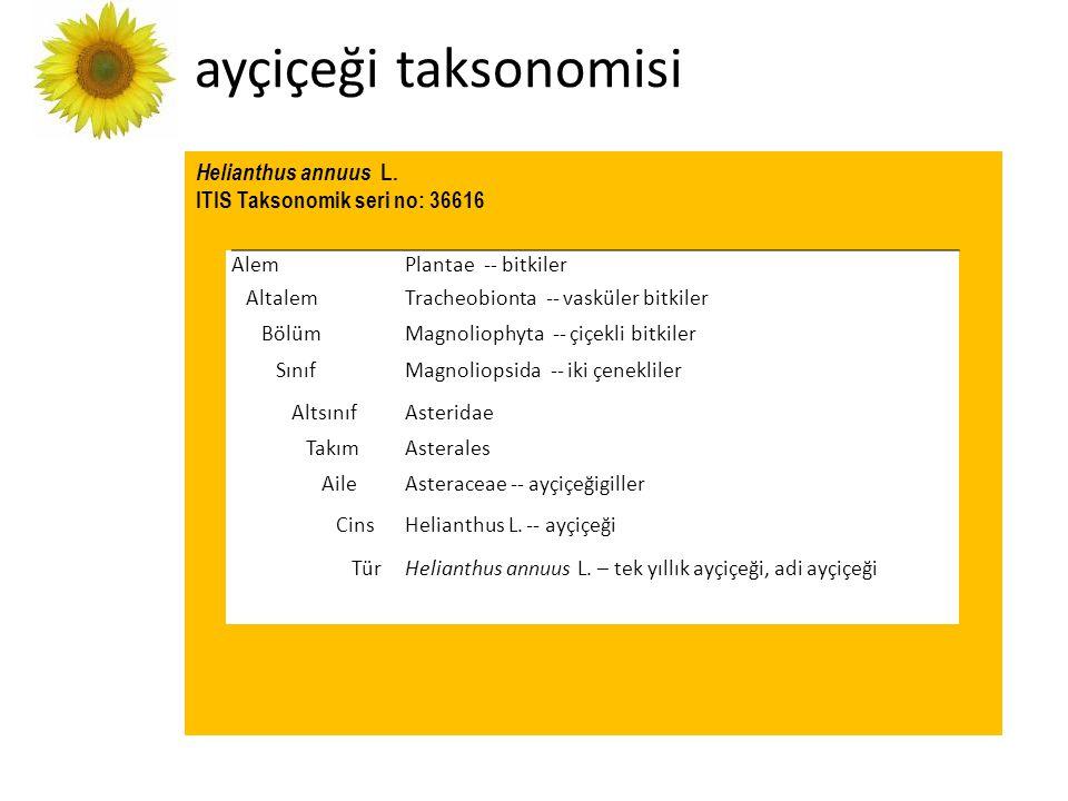 ayçiçeği taksonomisi Helianthus annuus L. ITIS Taksonomik seri no: 36616 AlemPlantae -- bitkiler AltalemTracheobionta -- vasküler bitkiler BölümMagnol