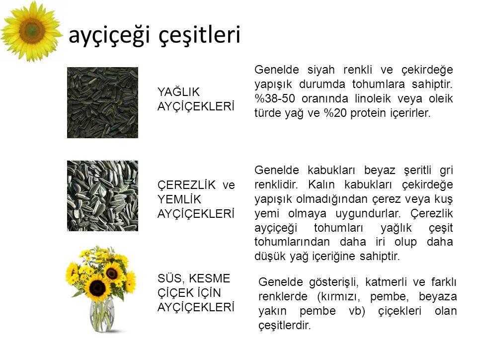 ayçiçeği çeşitleri YAĞLIK AYÇİÇEKLERİ ÇEREZLİK ve YEMLİK AYÇİÇEKLERİ SÜS, KESME ÇİÇEK İÇİN AYÇİÇEKLERİ Genelde siyah renkli ve çekirdeğe yapışık durum