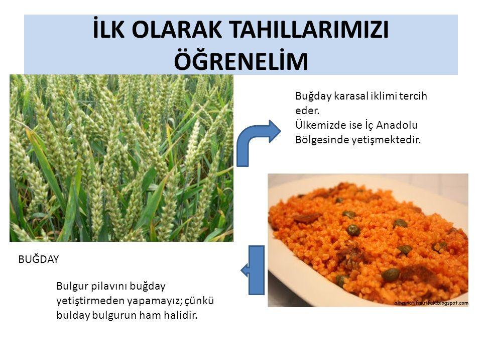 İLK OLARAK TAHILLARIMIZI ÖĞRENELİM BUĞDAY Buğday karasal iklimi tercih eder.