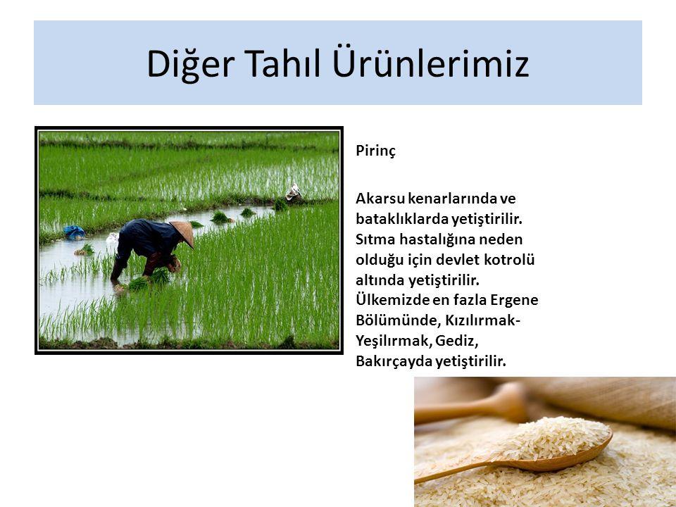 Diğer Tahıl Ürünlerimiz Pirinç Akarsu kenarlarında ve bataklıklarda yetiştirilir.