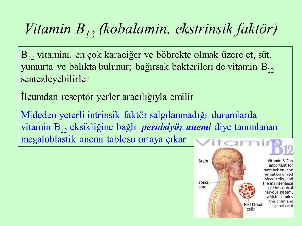 Vitamin B 12 (kobalamin, ekstrinsik faktör) B 12 vitamini, en çok karaciğer ve böbrekte olmak üzere et, süt, yumurta ve balıkta bulunur; bağırsak bakt