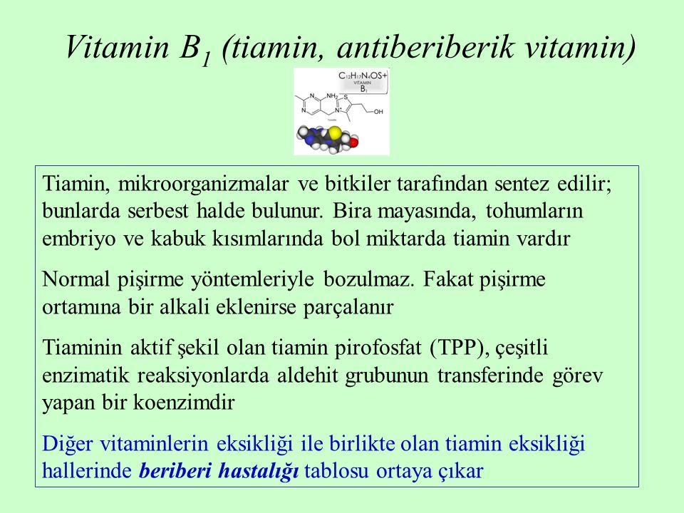 Vitamin B 1 (tiamin, antiberiberik vitamin) Tiamin, mikroorganizmalar ve bitkiler tarafından sentez edilir; bunlarda serbest halde bulunur. Bira mayas