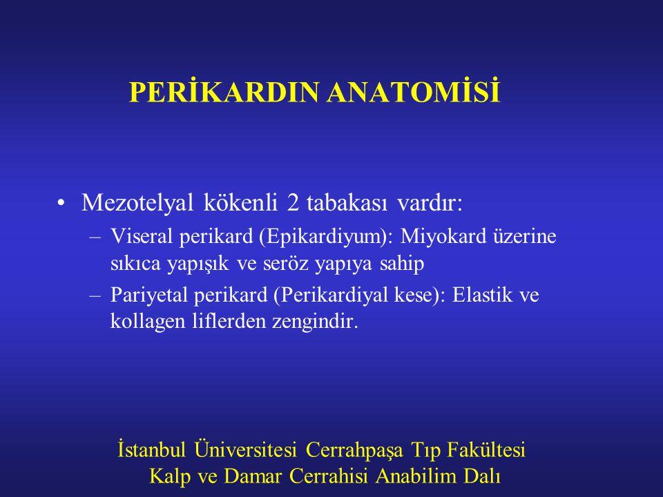İstanbul Üniversitesi Cerrahpaşa Tıp Fakültesi Kalp ve Damar Cerrahisi Anabilim Dalı PERİKARDIN ANATOMİSİ Mezotelyal kökenli 2 tabakası vardır: –Viser