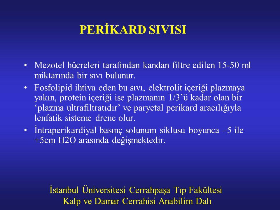 İstanbul Üniversitesi Cerrahpaşa Tıp Fakültesi Kalp ve Damar Cerrahisi Anabilim Dalı PERİKARD SIVISI Mezotel hücreleri tarafından kandan filtre edilen
