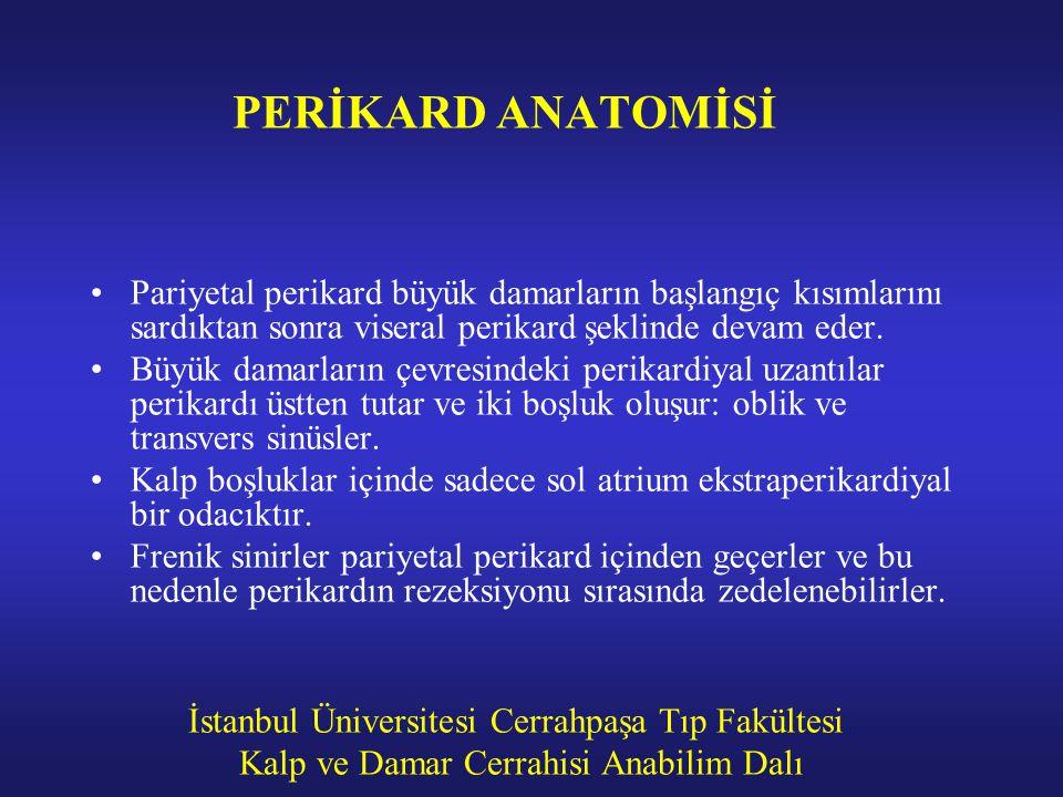İstanbul Üniversitesi Cerrahpaşa Tıp Fakültesi Kalp ve Damar Cerrahisi Anabilim Dalı PERİKARD ANATOMİSİ Pariyetal perikard büyük damarların başlangıç