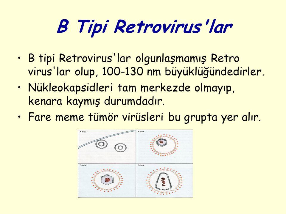 B Tipi Retrovirus'lar B tipi Retrovirus'lar olgunlaşmamış Retro virus'lar olup, 100-130 nm büyüklüğündedirler. Nükleokapsidleri tam merkezde olmayıp,