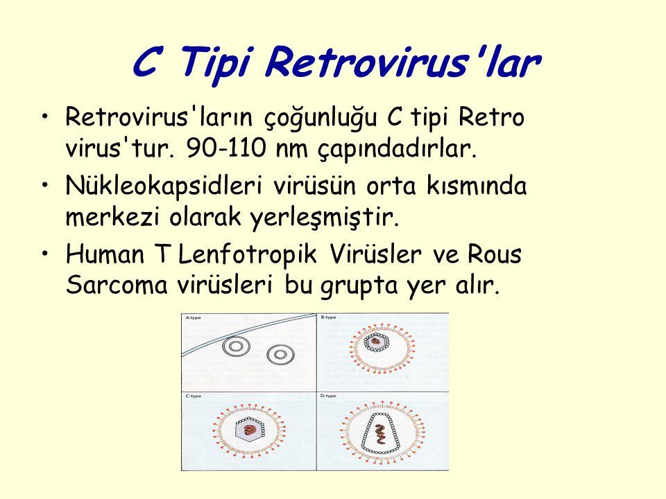 C Tipi Retrovirus'lar Retrovirus'ların çoğunluğu C tipi Retro virus'tur. 90-110 nm çapındadırlar. Nükleokapsidleri virüsün orta kısmında merkezi olara