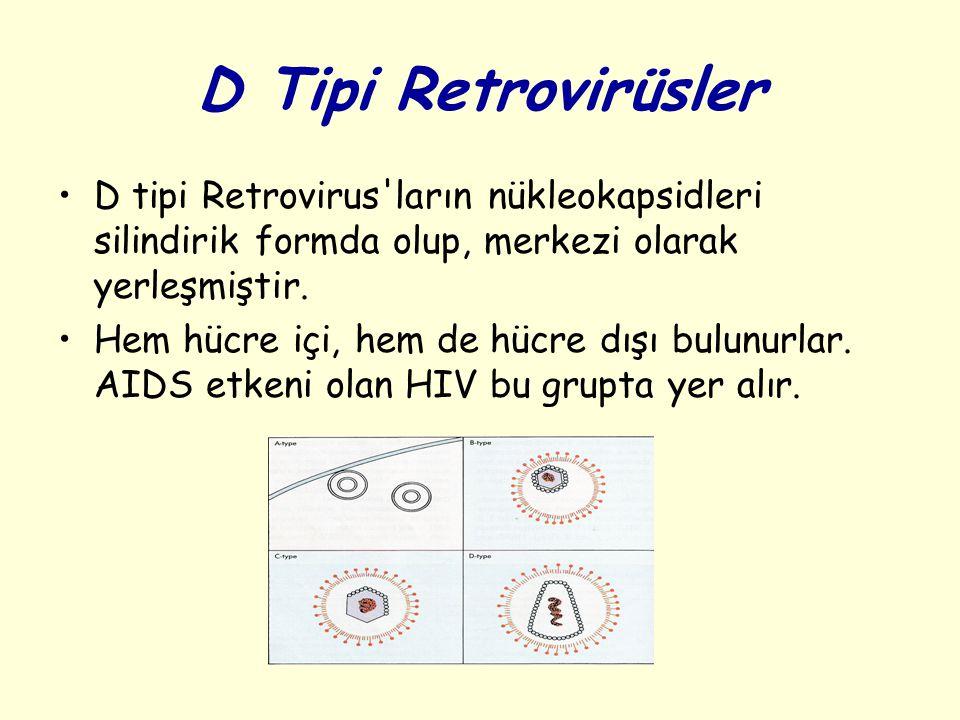 D Tipi Retrovirüsler D tipi Retrovirus'ların nükleokapsidleri silindirik formda olup, merkezi olarak yerleşmiştir. Hem hücre içi, hem de hücre dışı bu